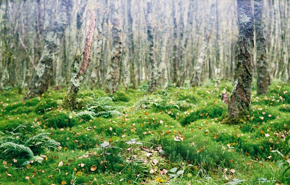 Glendalough, Leica M2, Sonnar